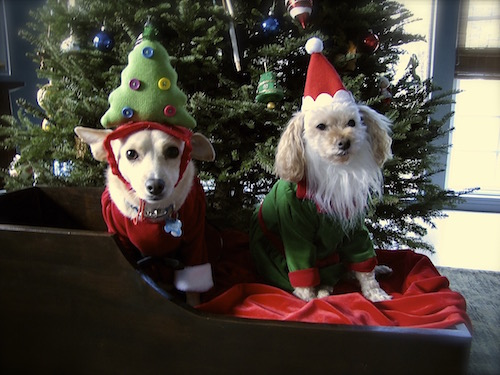 christmas-costumes-for-dogs