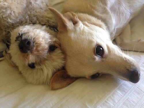 dogs can help reduce stress
